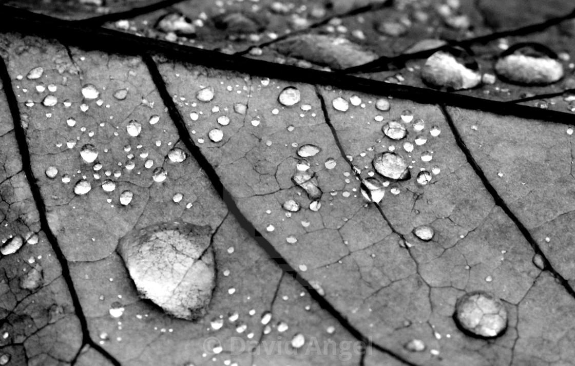 """""""Rainy veiny"""" stock image"""