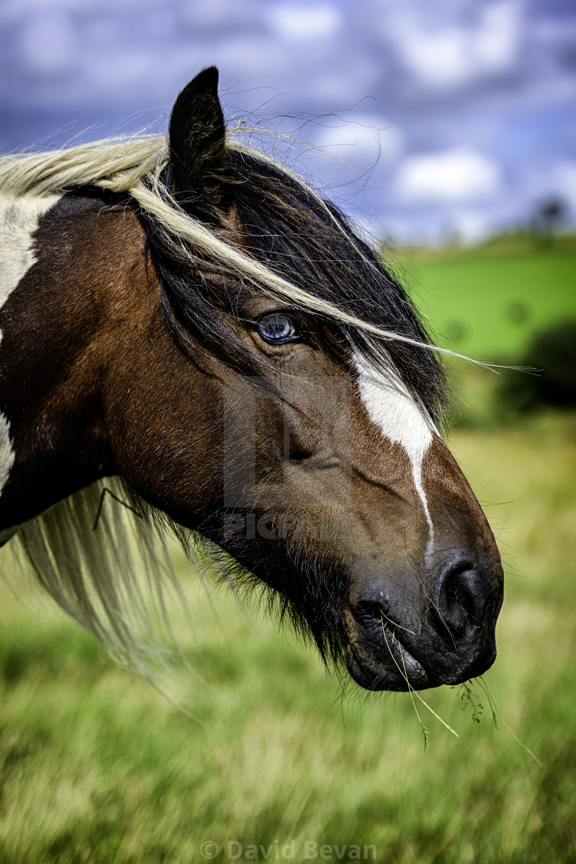 """Pony"" stock image"