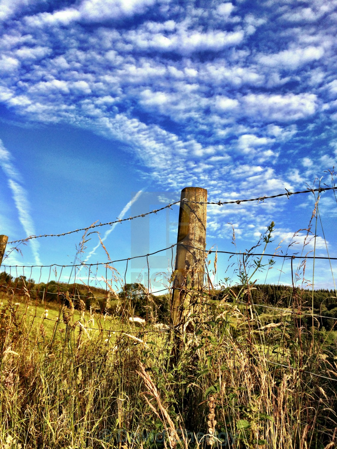 """Fence post and cumulus sky"" stock image"