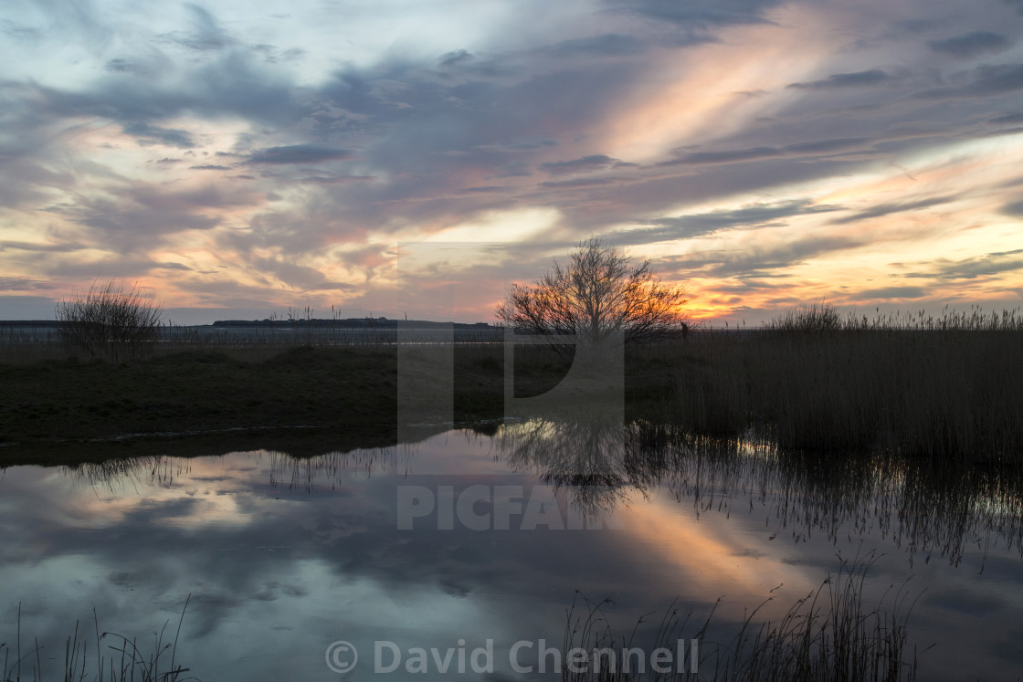 """Natterjack Pond Reflection"" stock image"