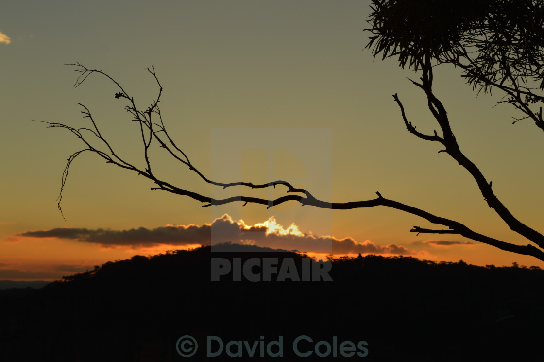 """""""Sunset in the woods"""" stock image"""
