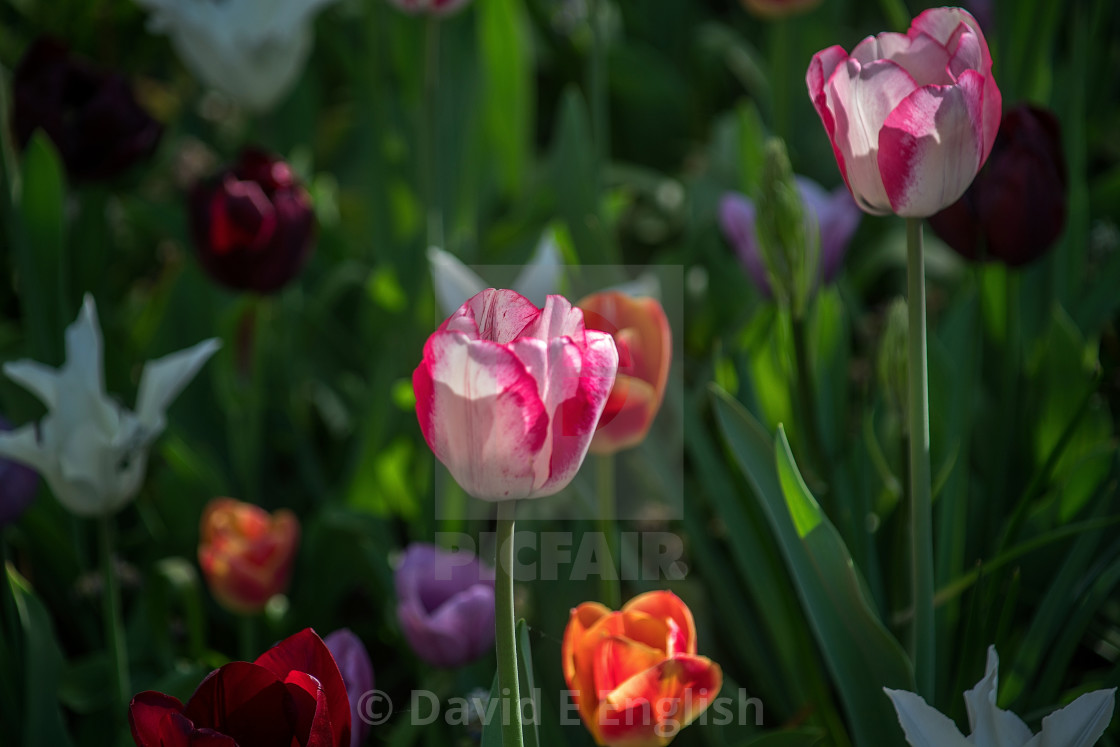 """""""Flowers planted at a public garden"""" stock image"""