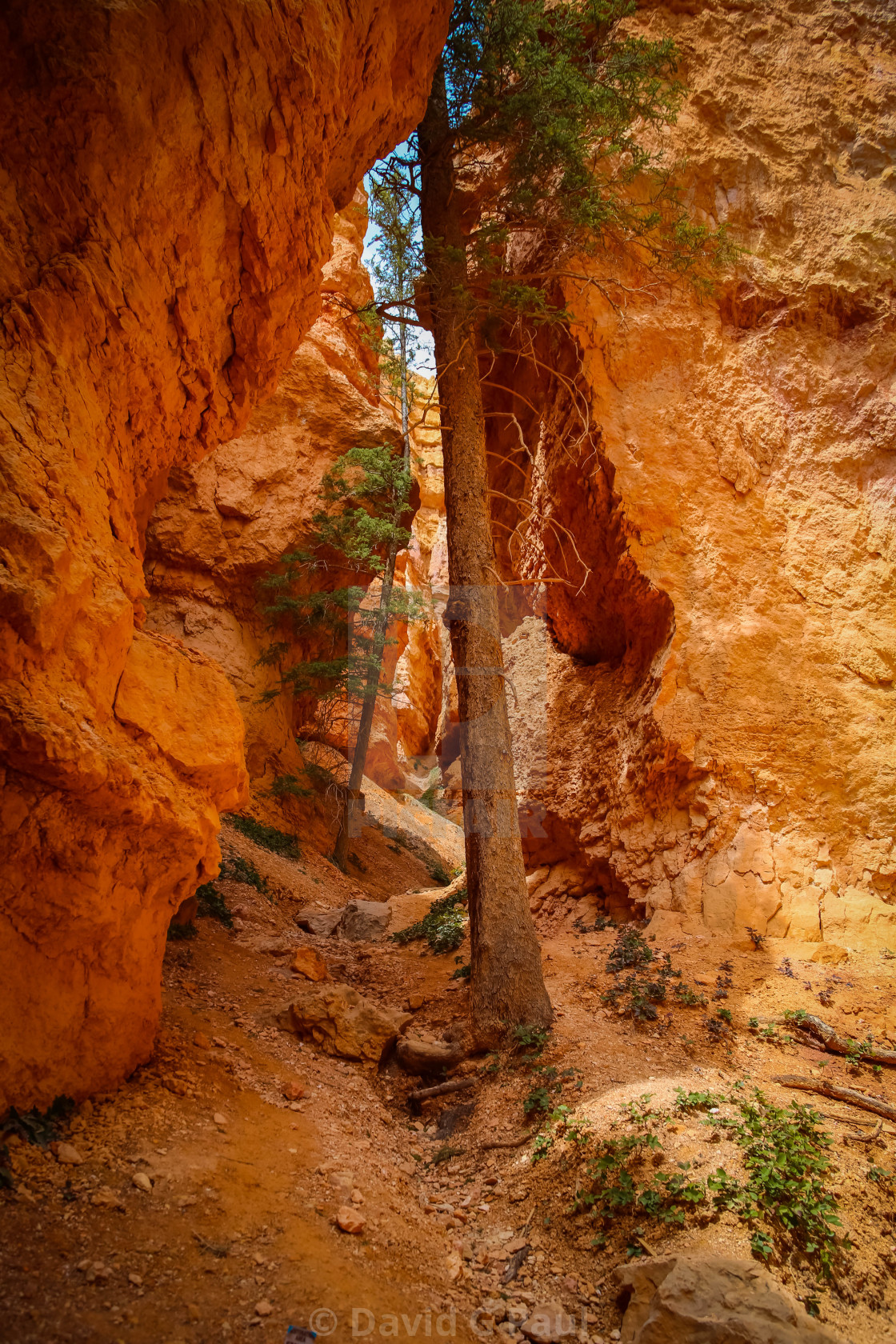 """""""Bryce Canyon National Park"""" stock image"""