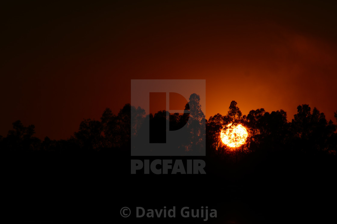 """Sun across the trees"" stock image"