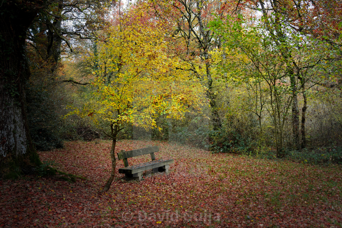 """Autumn bench"" stock image"
