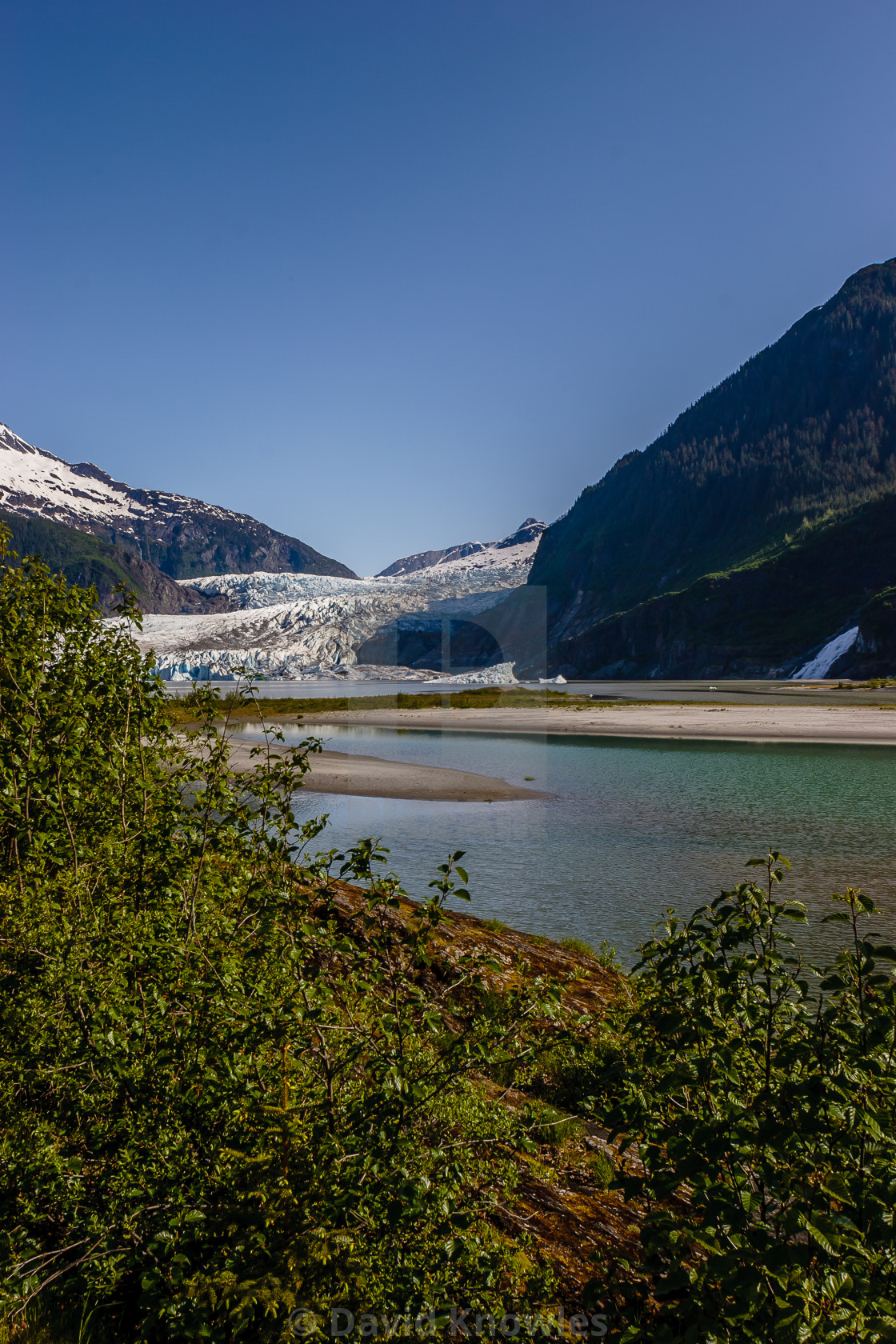 """A Magnificent view of a slowly retreating Mendenhall Glacier portrait view Alaska"" stock image"