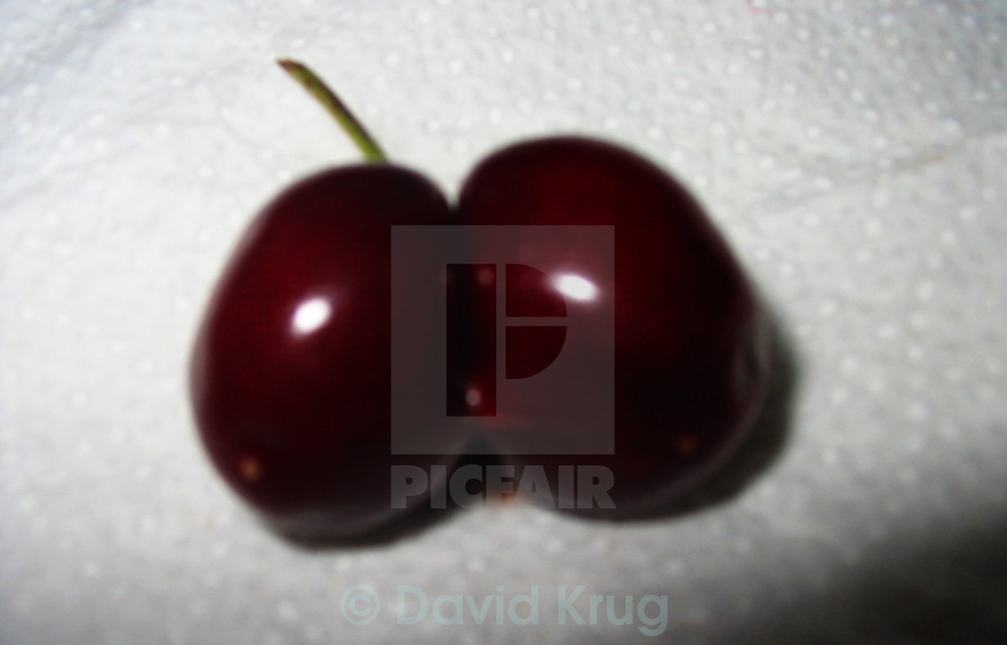 """Blurry Siamese Twin Cherry"" stock image"