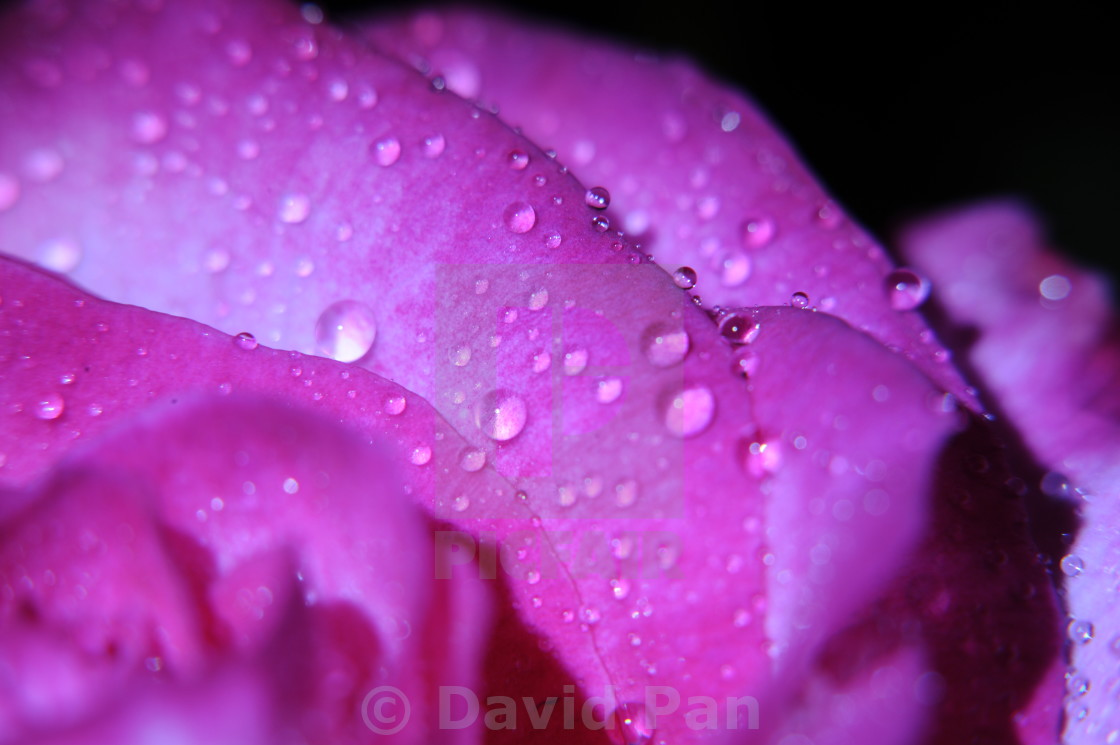 """""""the impressive flower with drop of water in macro view"""" stock image"""