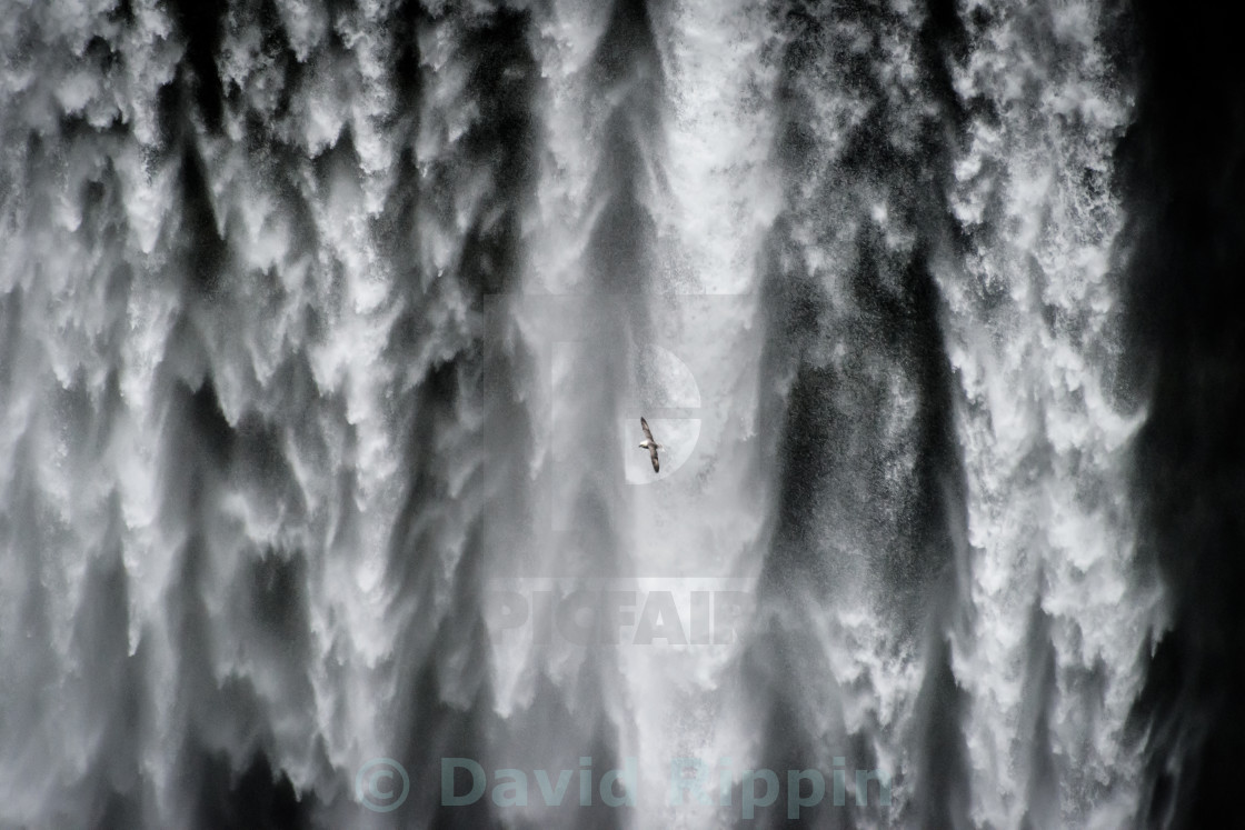 """Gull and Waterfall"" stock image"