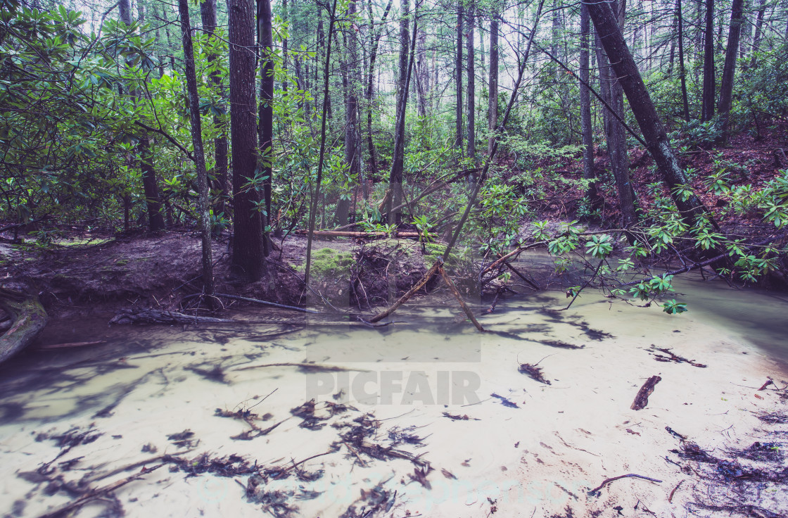 """""""A Shallow Forest Stream"""" stock image"""