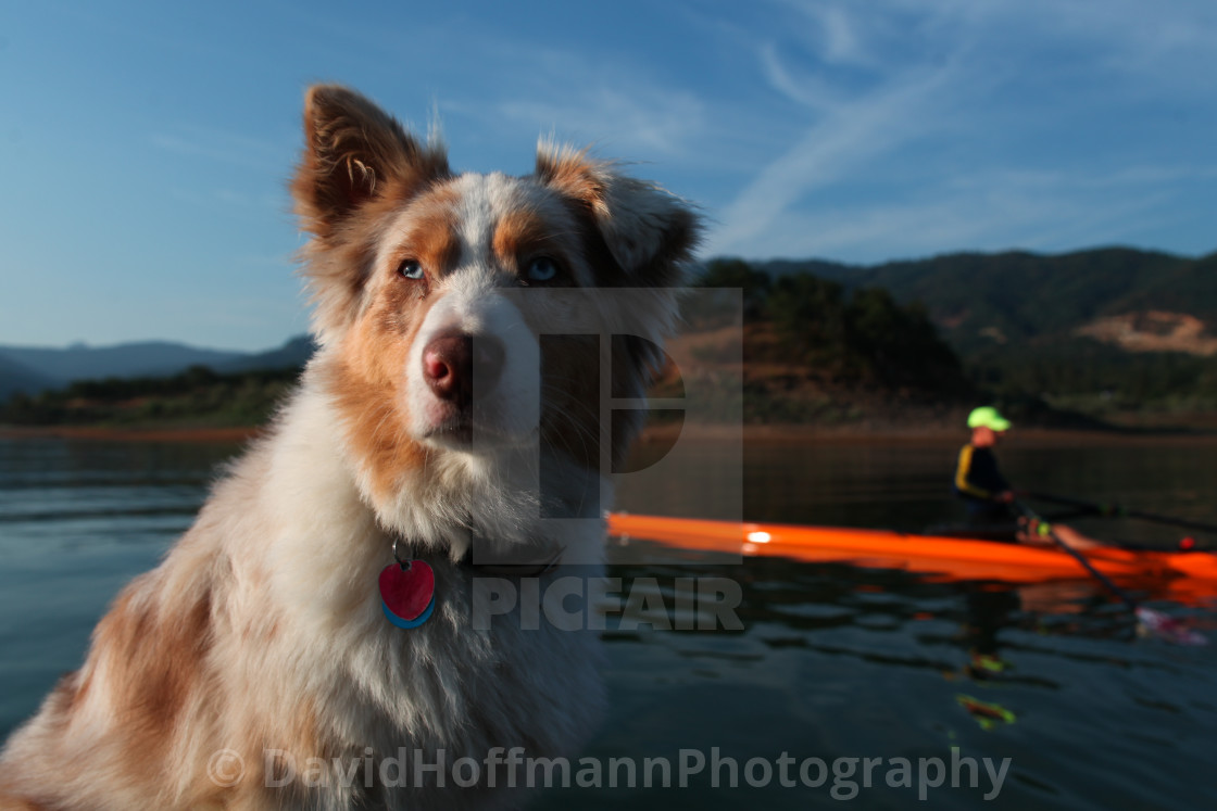 """Lucy sits on the bow of the launch as Brian rows his boat on thi"" stock image"