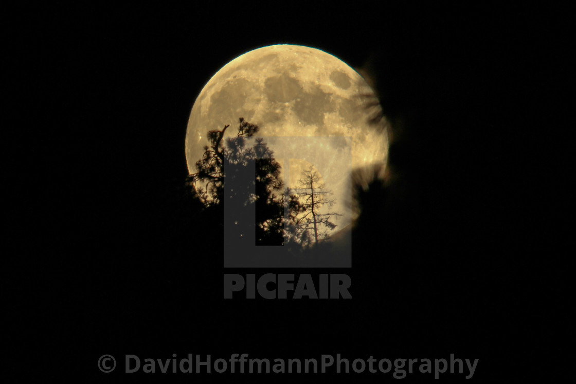 """Full moon rising behind the trees."" stock image"