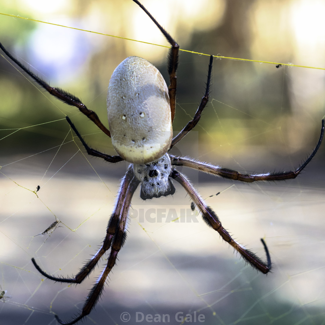 """Comical spider hanging upside down in a web"" stock image"