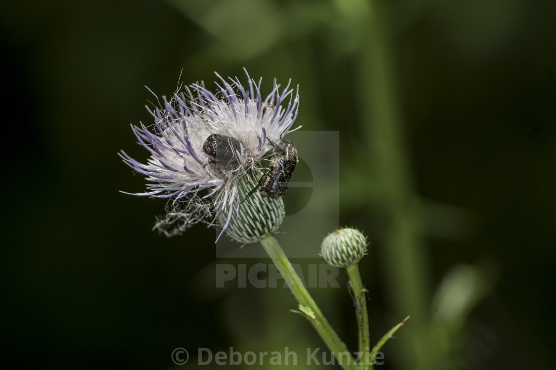 """Home for Insects"" stock image"