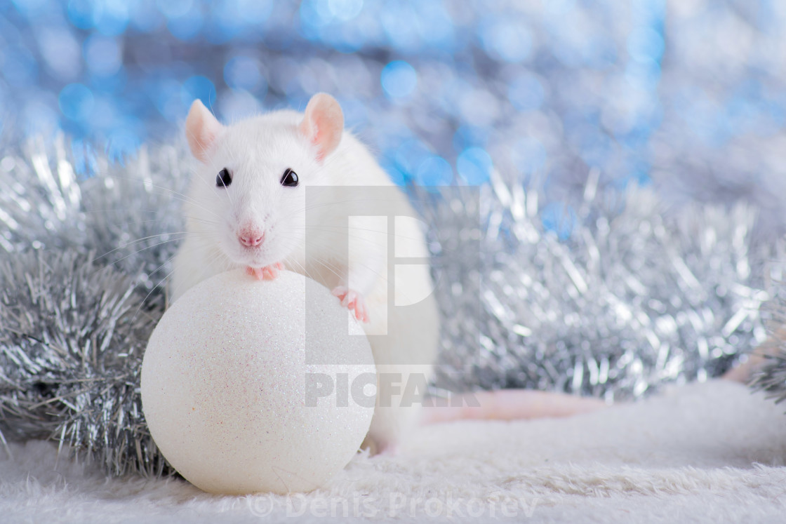 """Happy New Year! Symbol of New Year 2020 - white or metal (silver) rat. Cute rat with Christmas decorated"" stock image"