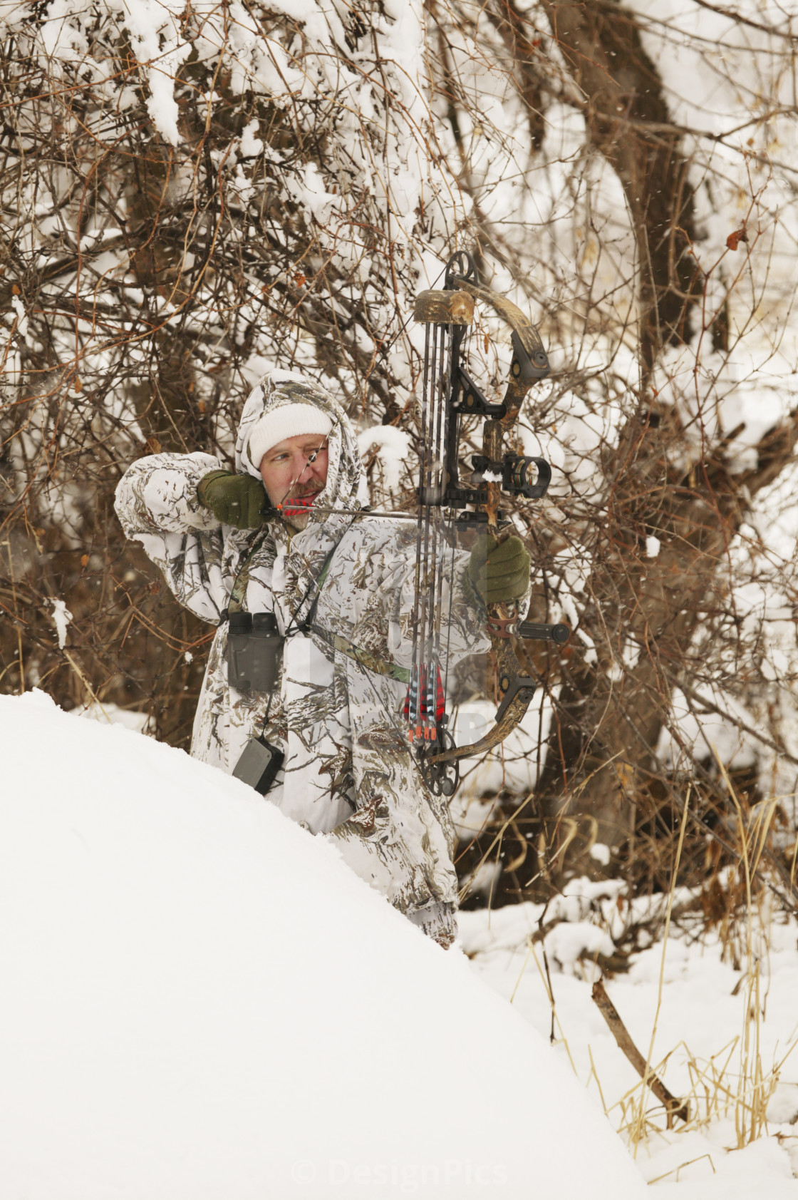 Male Bowhunter Draws Bow In Snow While Deer Hunting