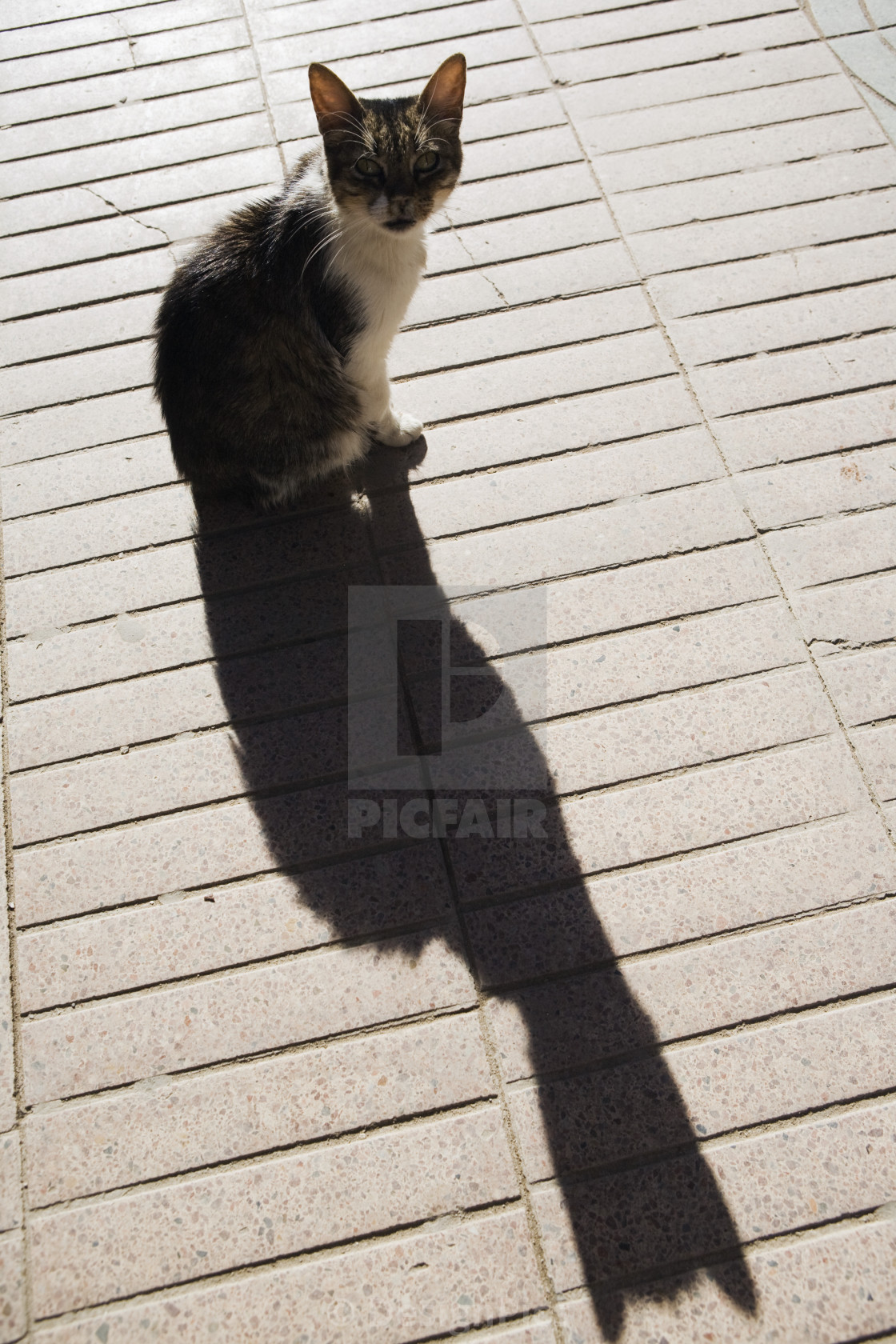 """Cat And Its Long Shadow, Essaouira, Morocco"" stock image"