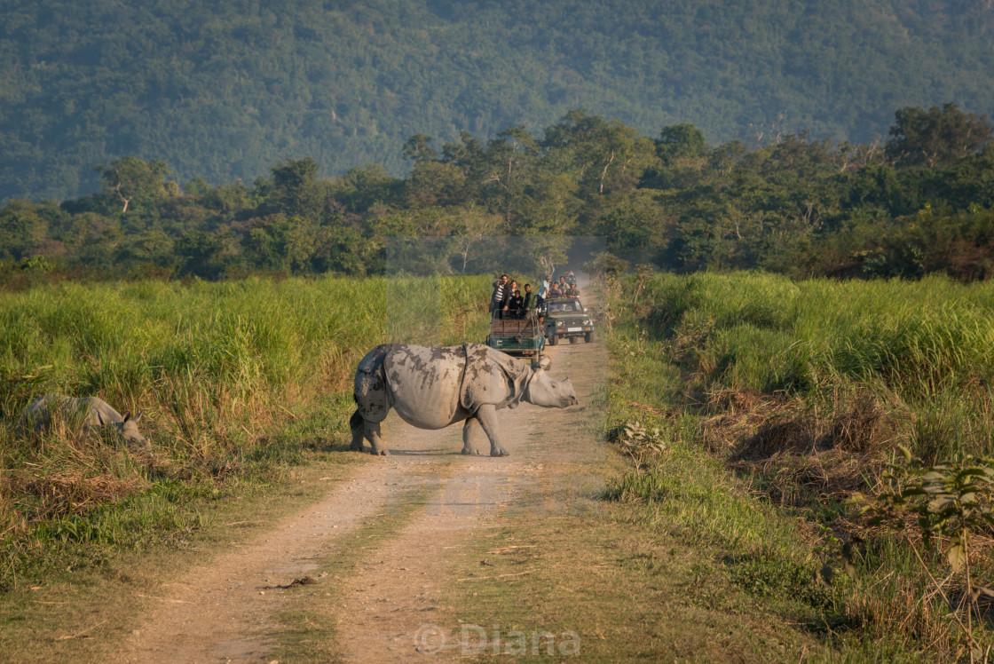 """On safari in Kaziranga, Assam, India"" stock image"