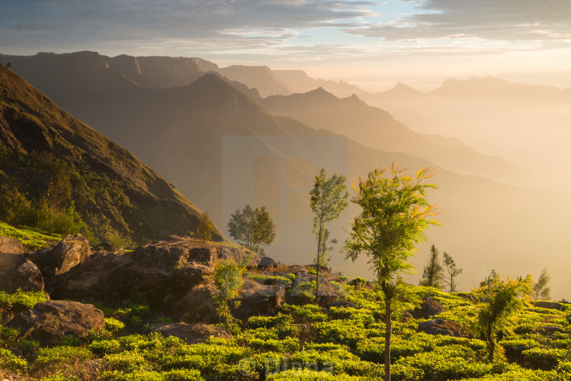 """Sunrise at Kolukkumalai in Kerala, India"" stock image"