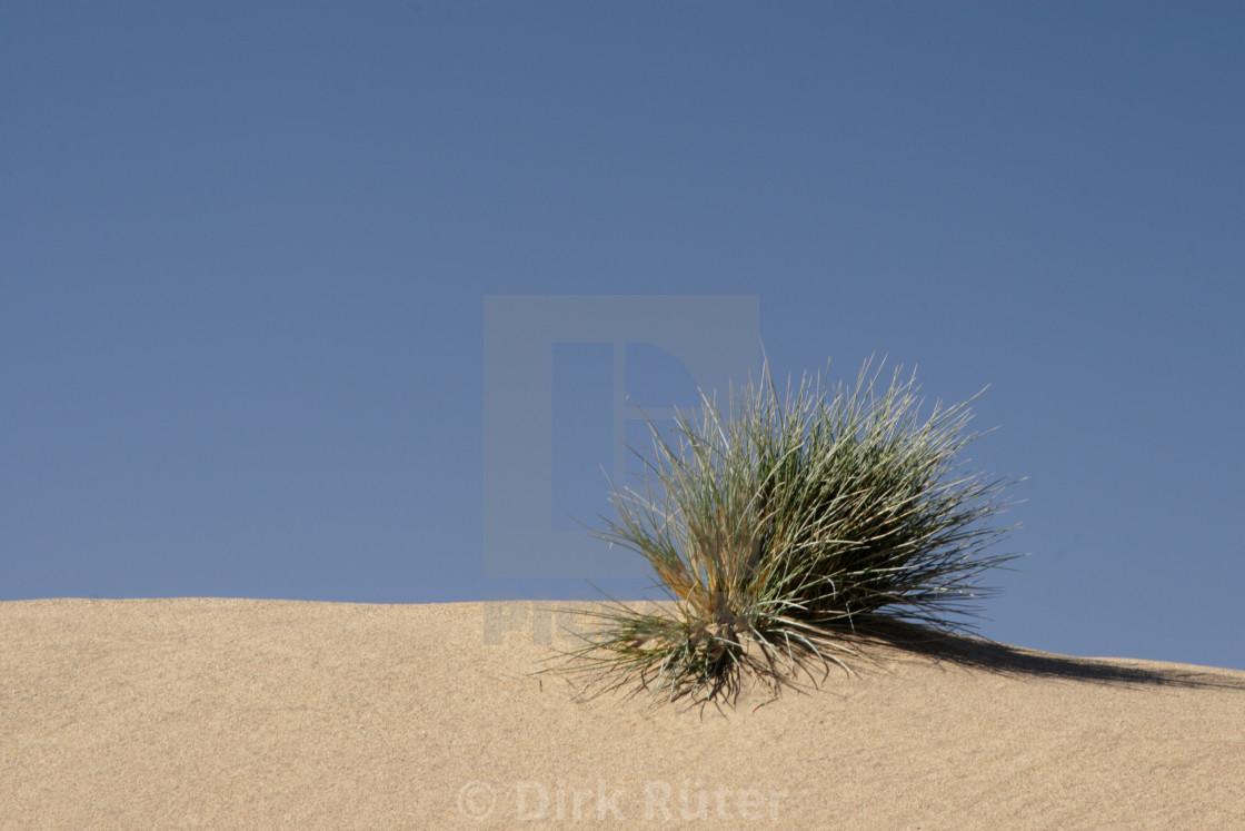 """""""Grass in the desert"""" stock image"""