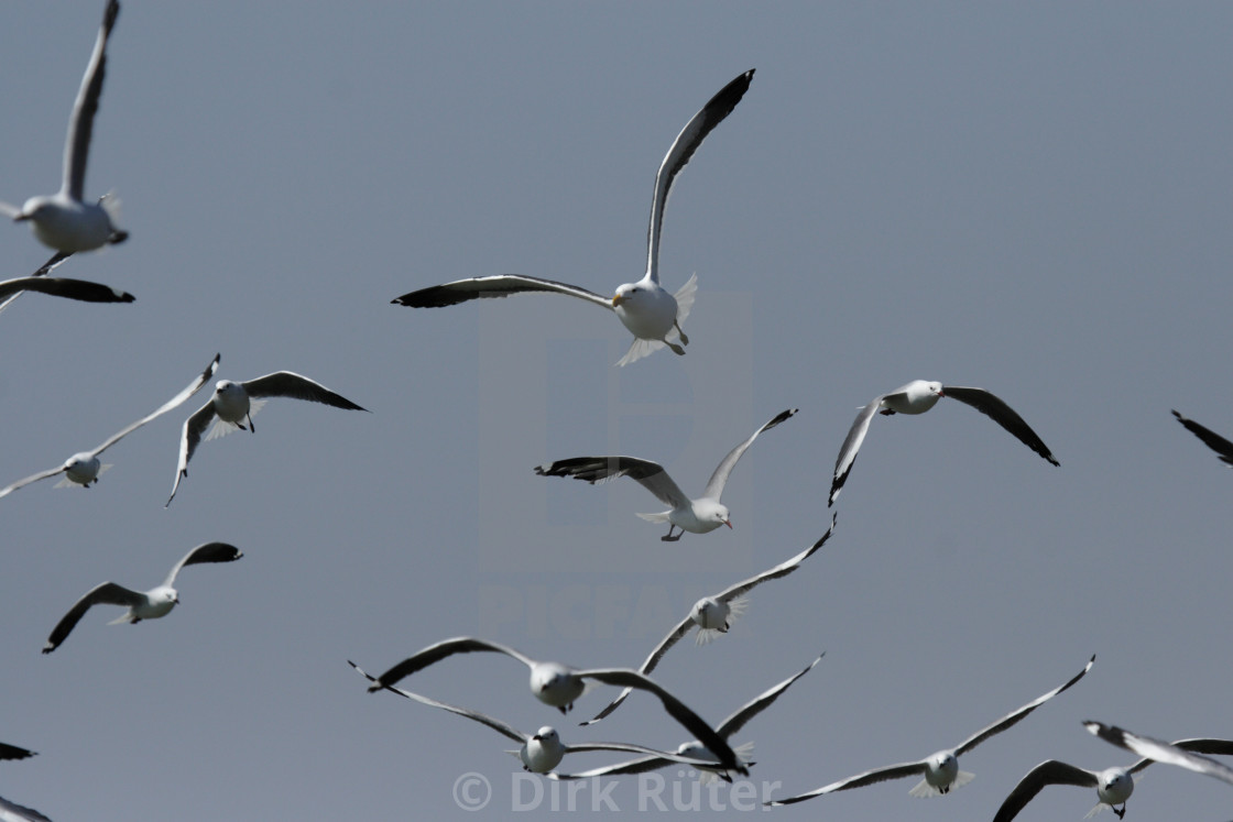 """A flock of seagulls"" stock image"