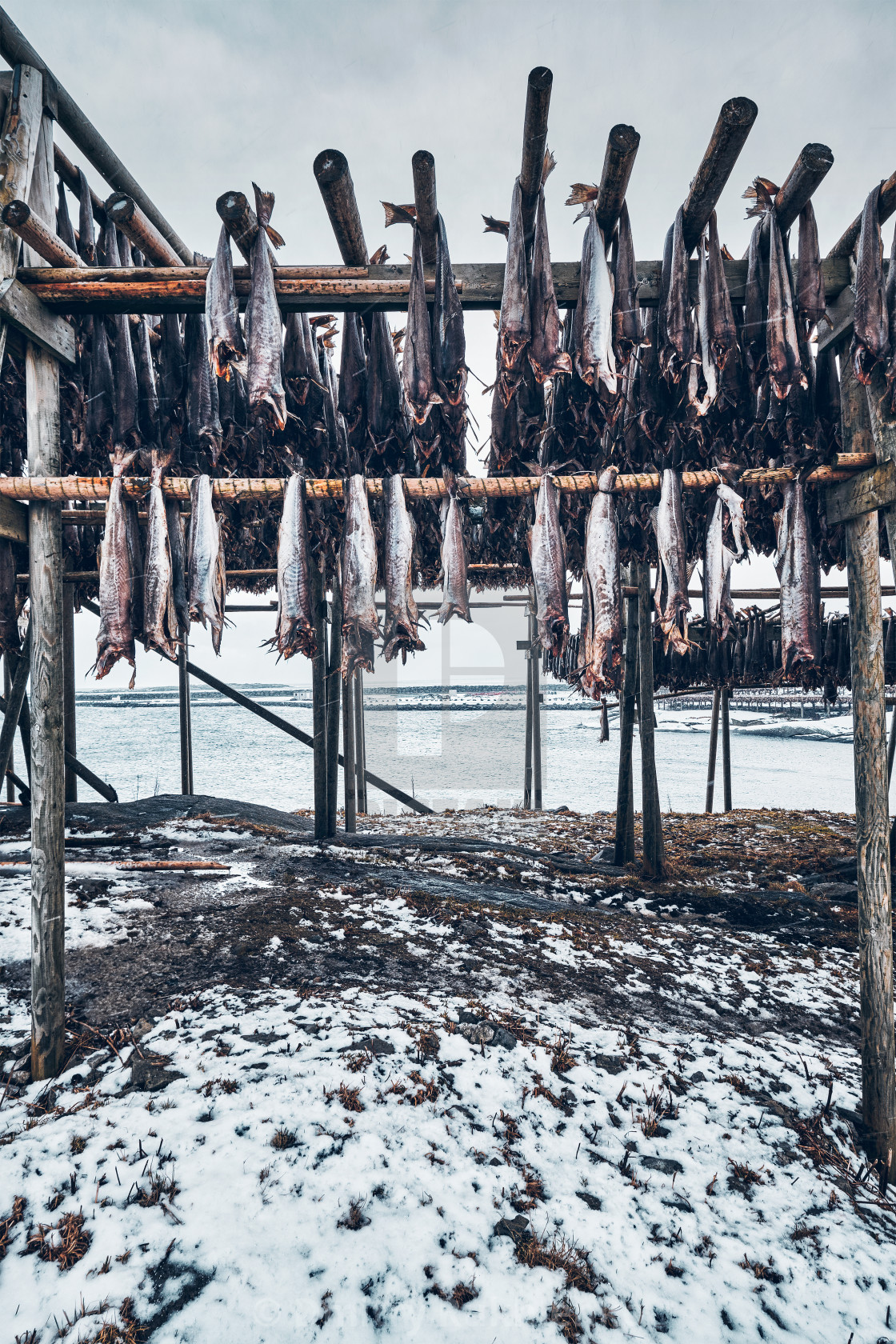 """Drying flakes for stockfish cod fish in winter. Lofoten islands,"" stock image"
