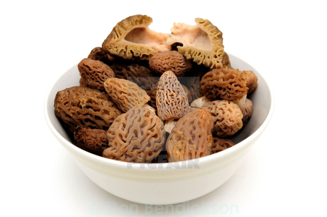 """Morel Mushroom On White"" stock image"