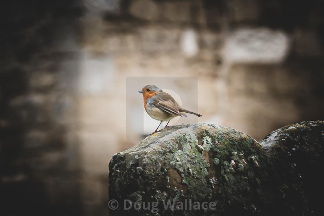 Robin at Church