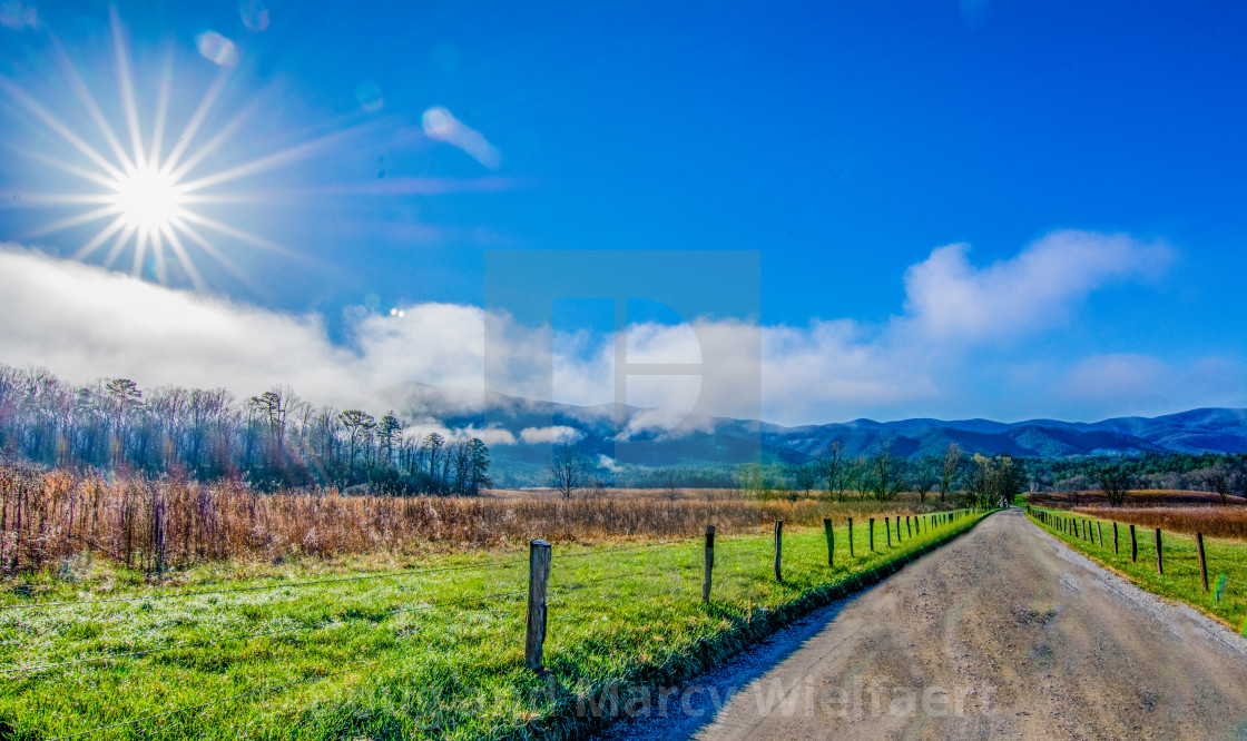 """Early Spring Sunburst"" stock image"