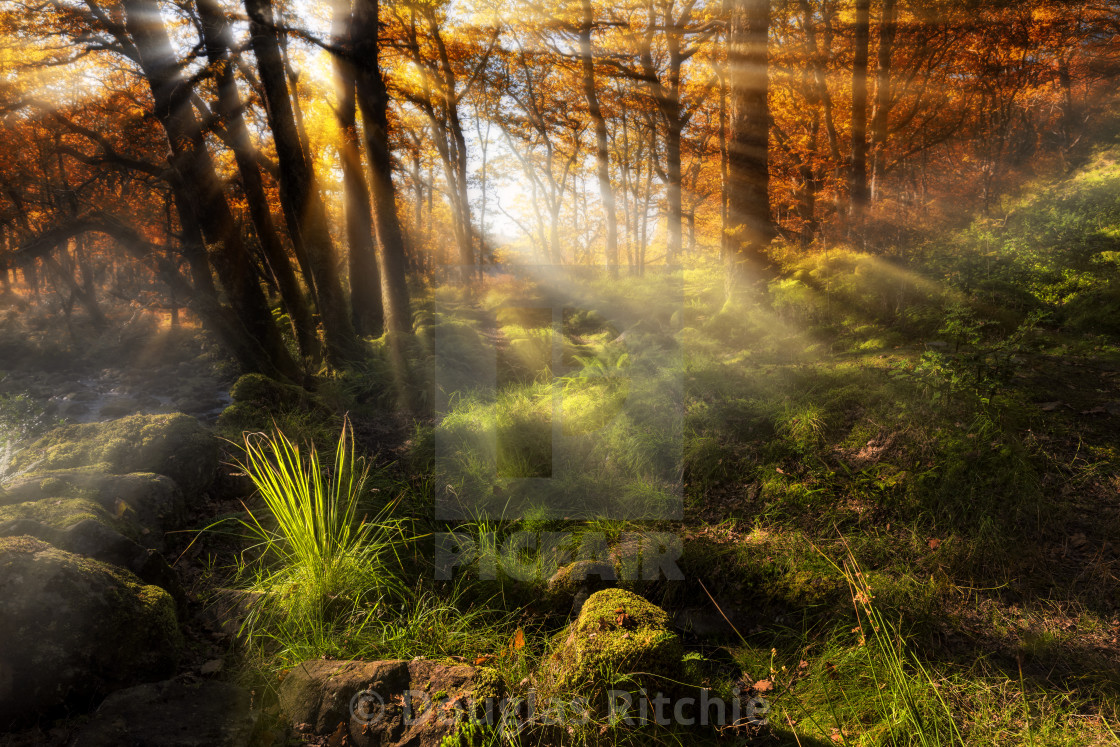 """The Enchanted Wood"" stock image"