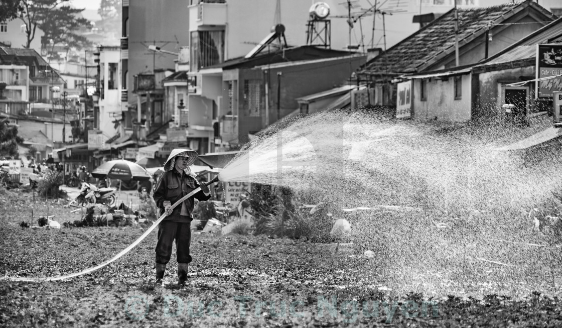 """Watering"" stock image"