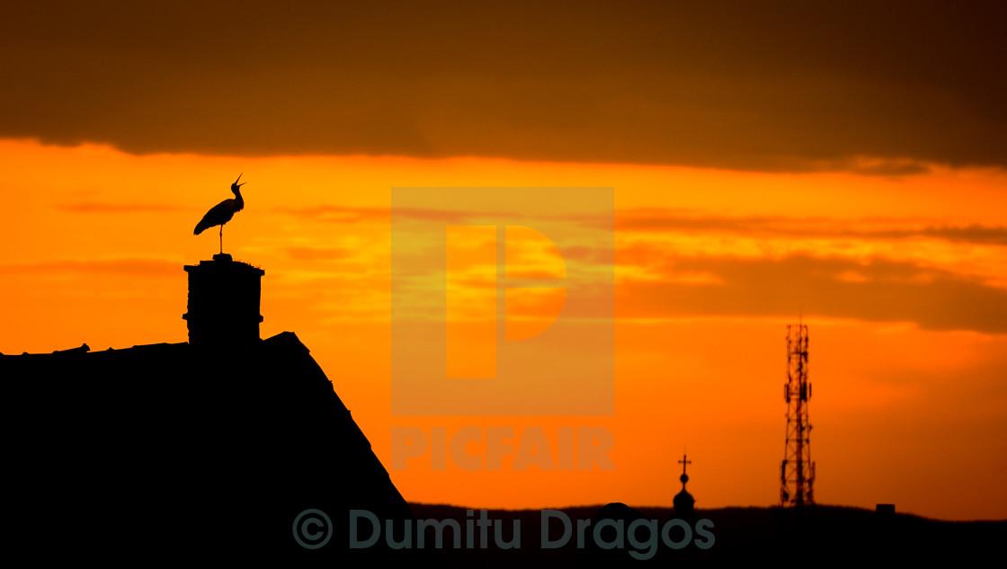 """Stork Sunset"" stock image"