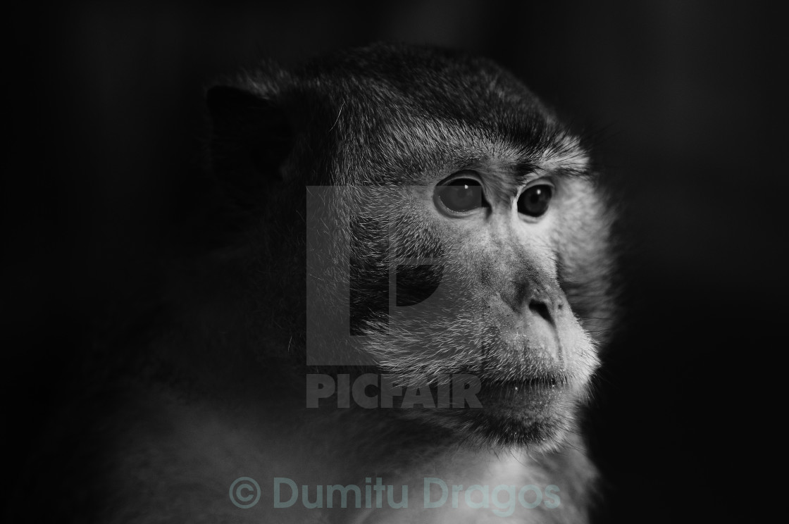 """Monkey"" stock image"