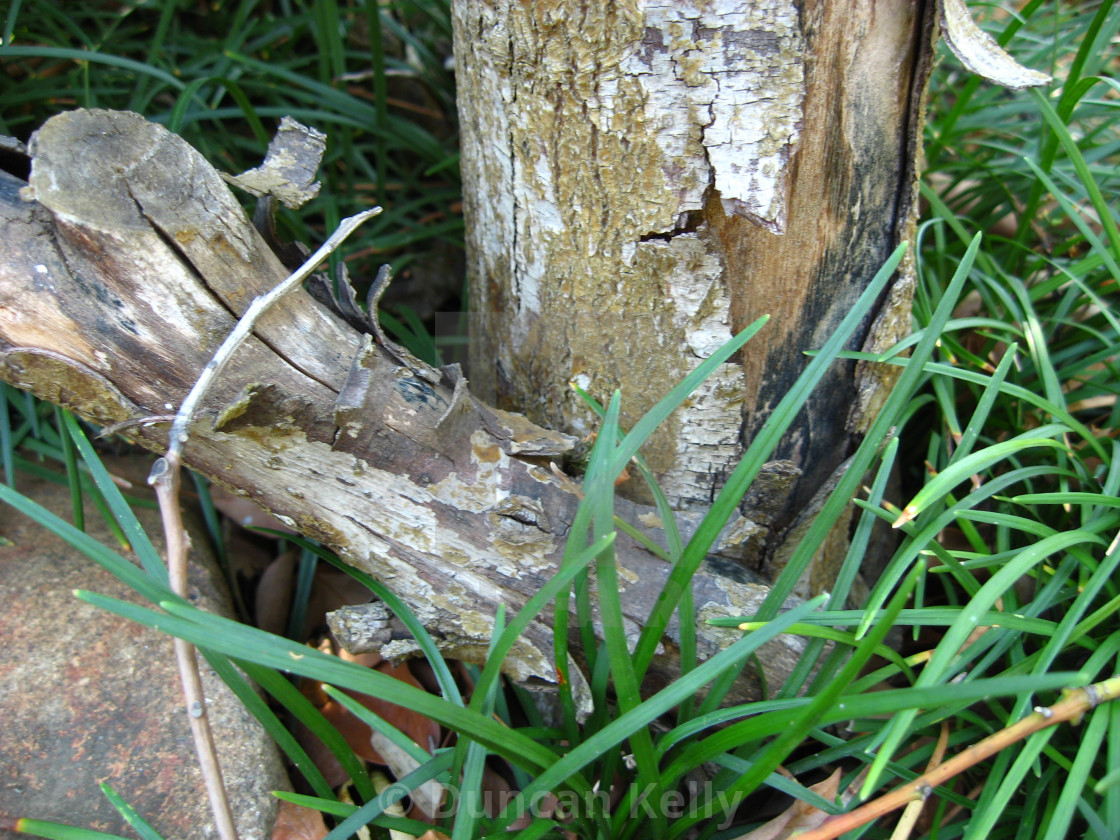 """""""A Dead tree and logs in green grass."""" stock image"""