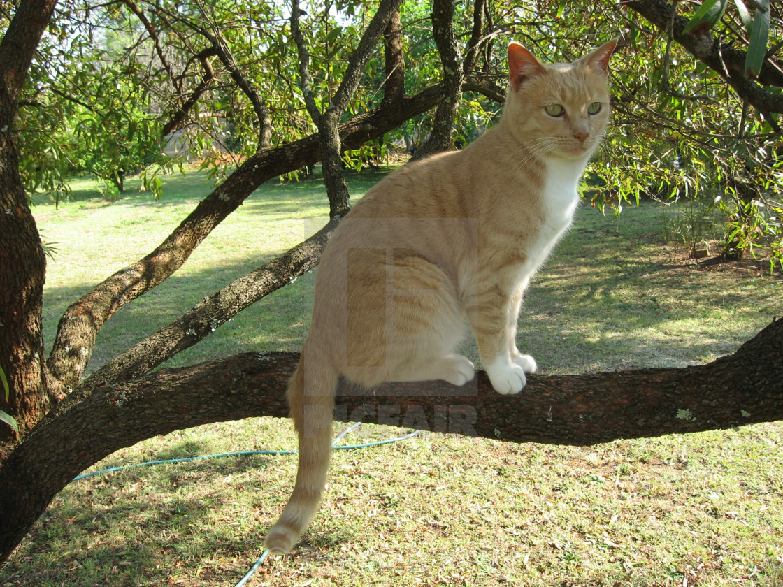 """""""A cute cat sits relaxed on a branch."""" stock image"""