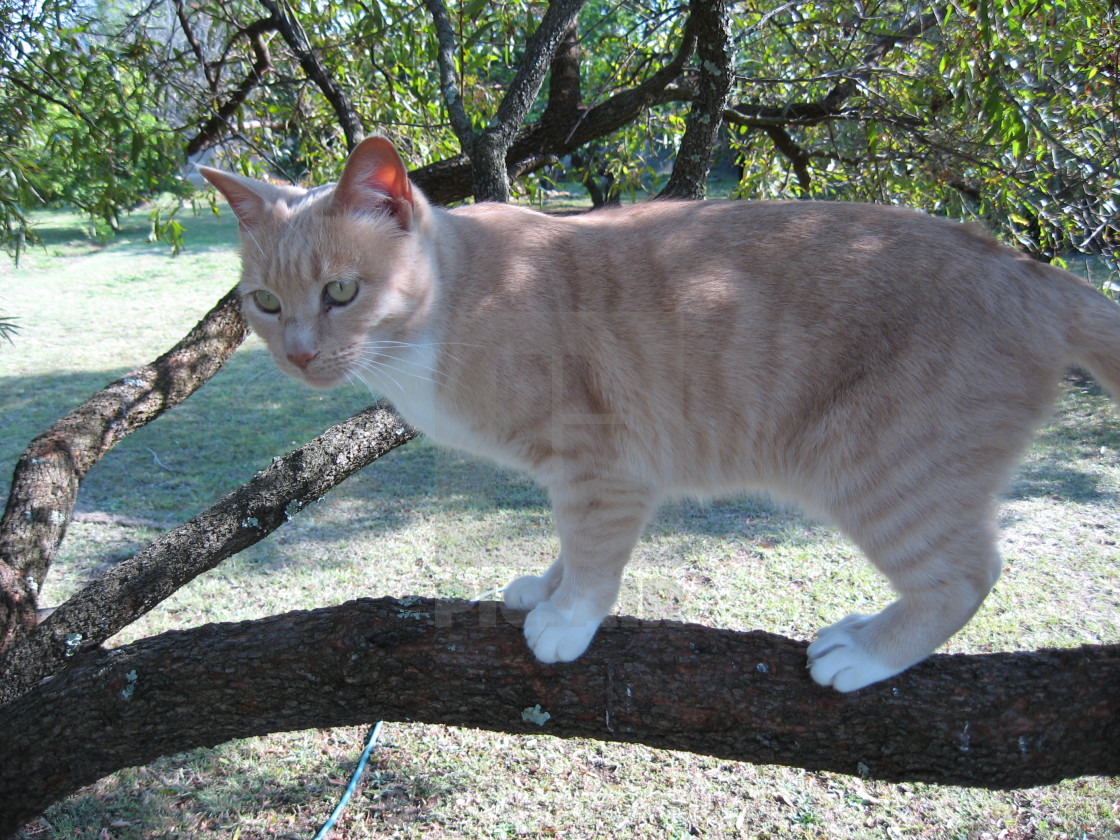 """A cat balances on a branch"" stock image"