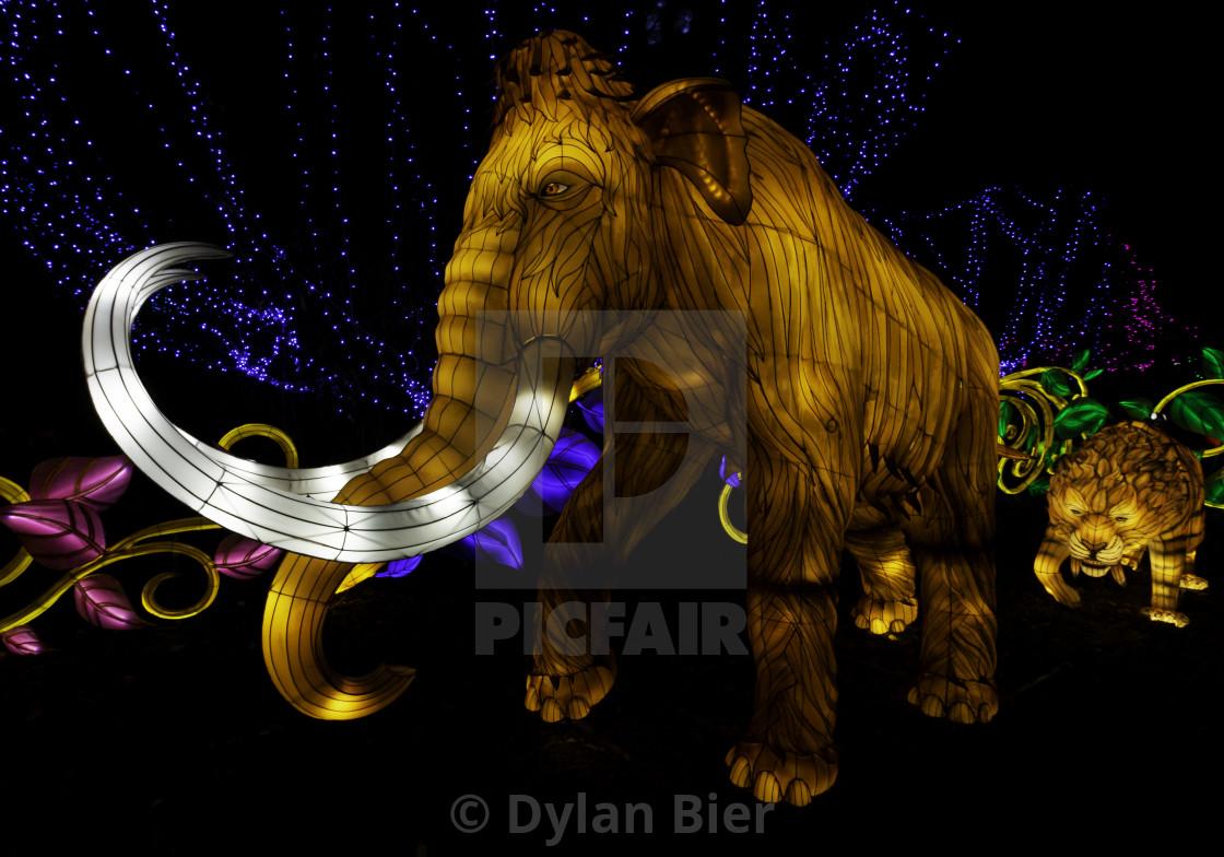 """Mammoth Chinese Lantern"" stock image"