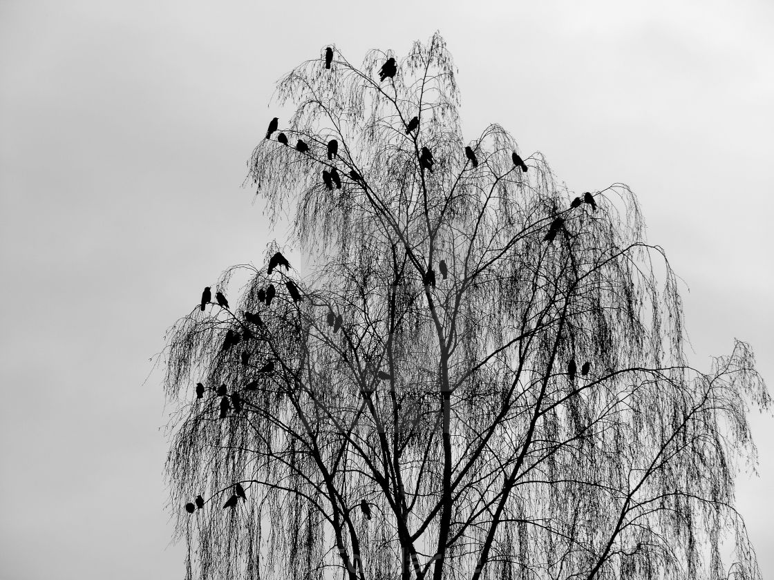 """Counting Crows"" stock image"