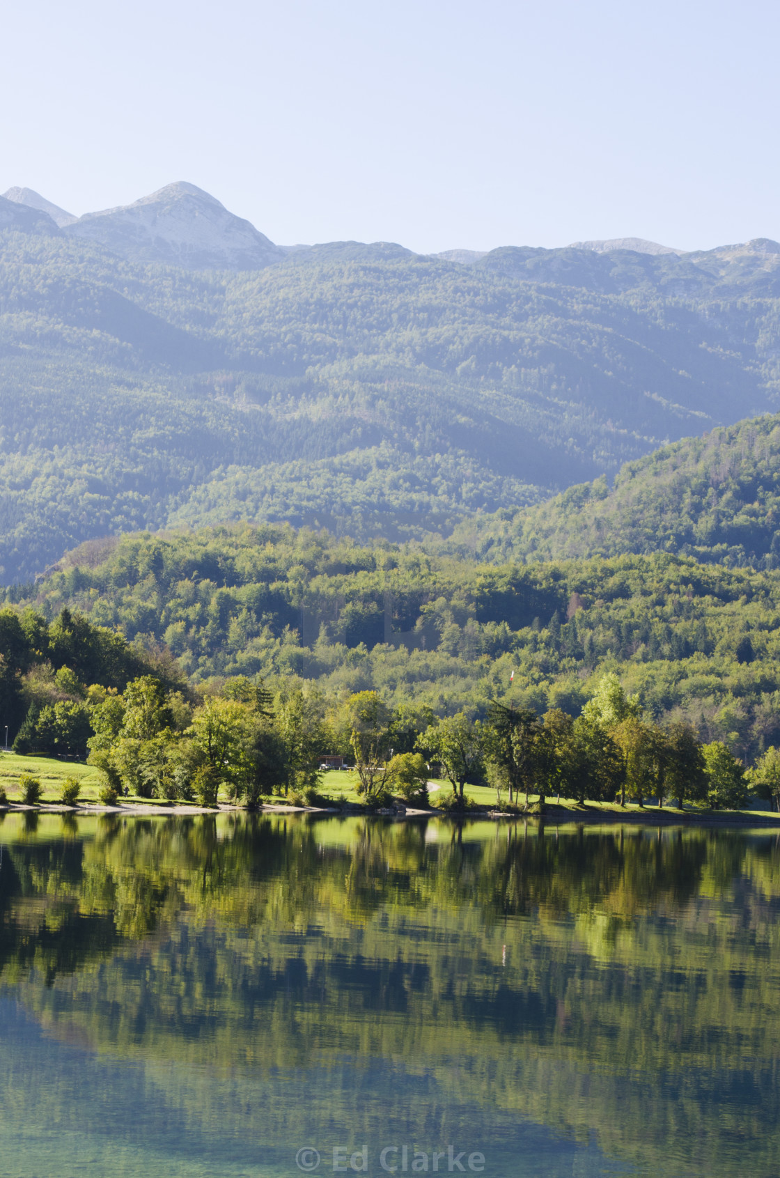"""Bohinj Trees"" stock image"