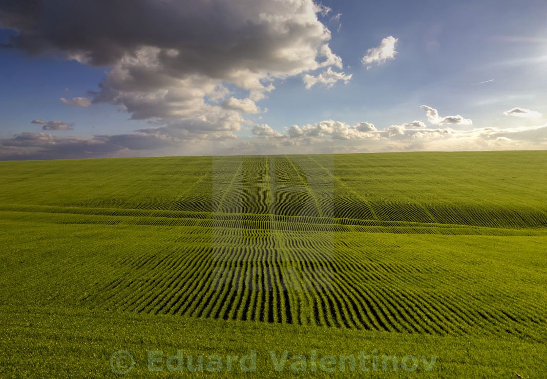 """green waves"" stock image"