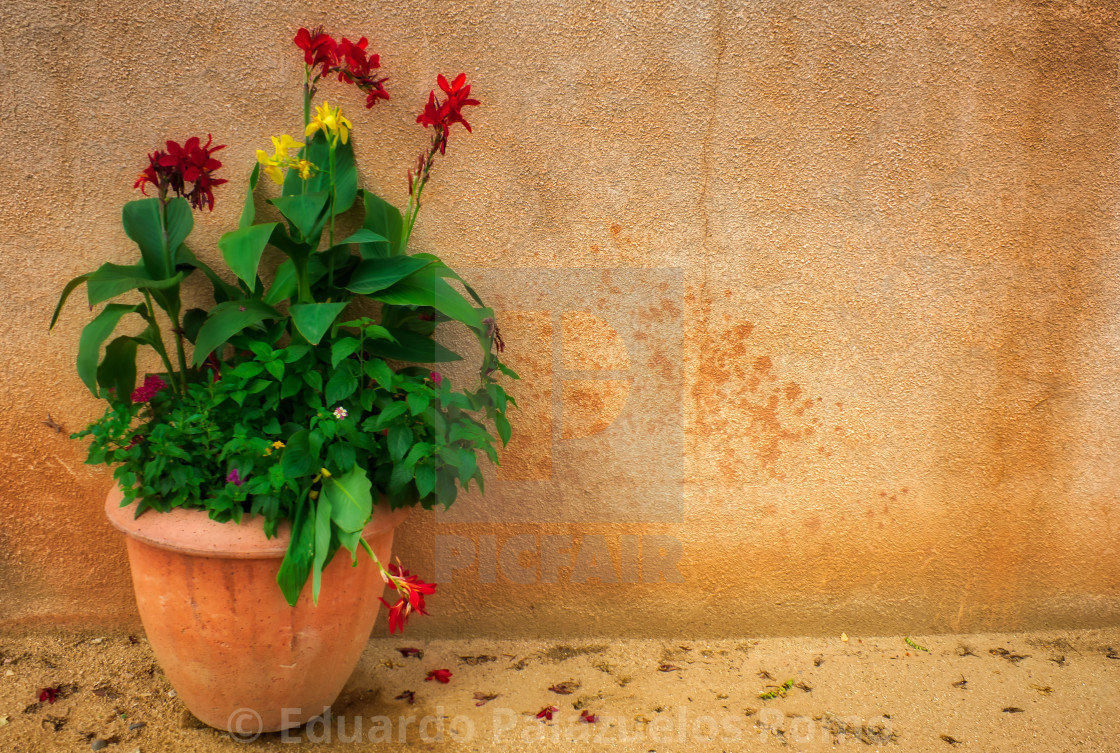 """""""Potted Flowers in Sedona"""" stock image"""