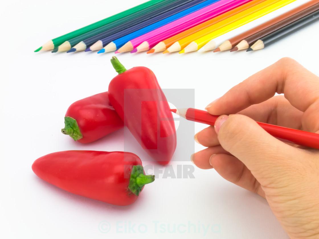 """""""Drawing Paprika"""" stock image"""