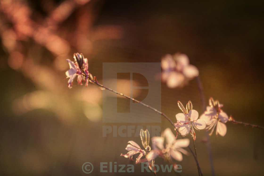 """""""Delicate stems at the golden hour"""" stock image"""