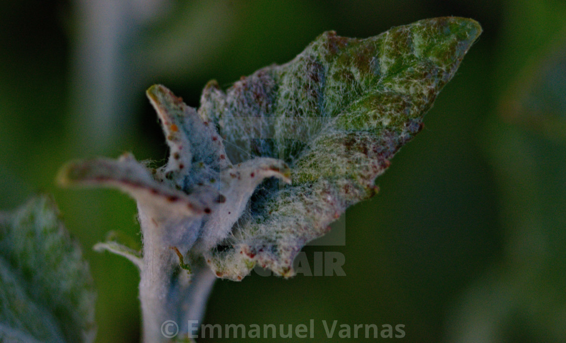 """unusual green leaf"" stock image"