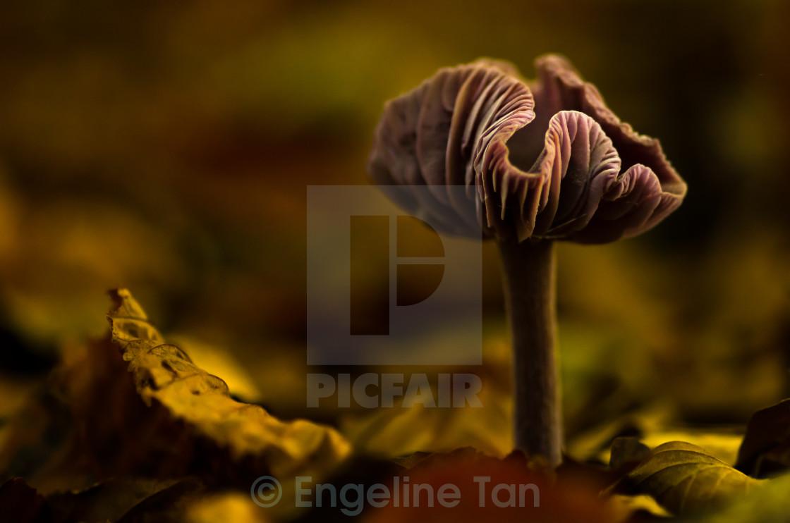 """A mushroom's magic"" stock image"
