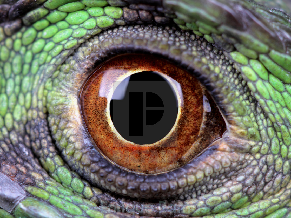 """water dragon eye"" stock image"