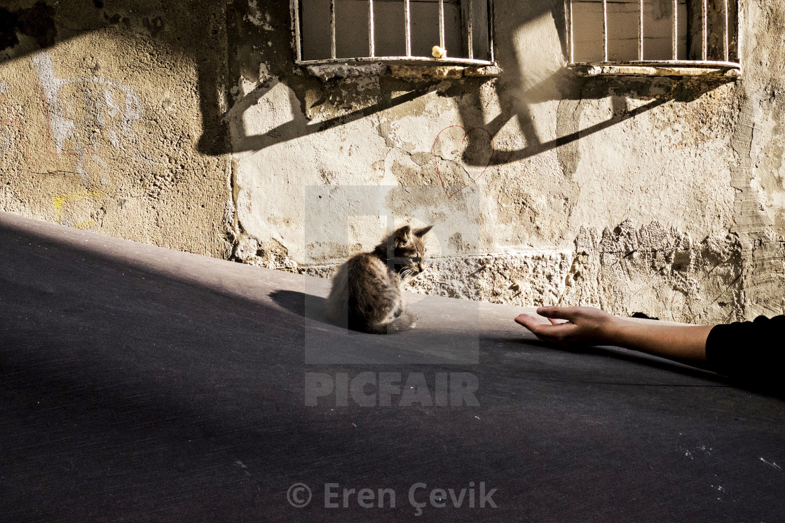 """The cats of Istanbul"" stock image"