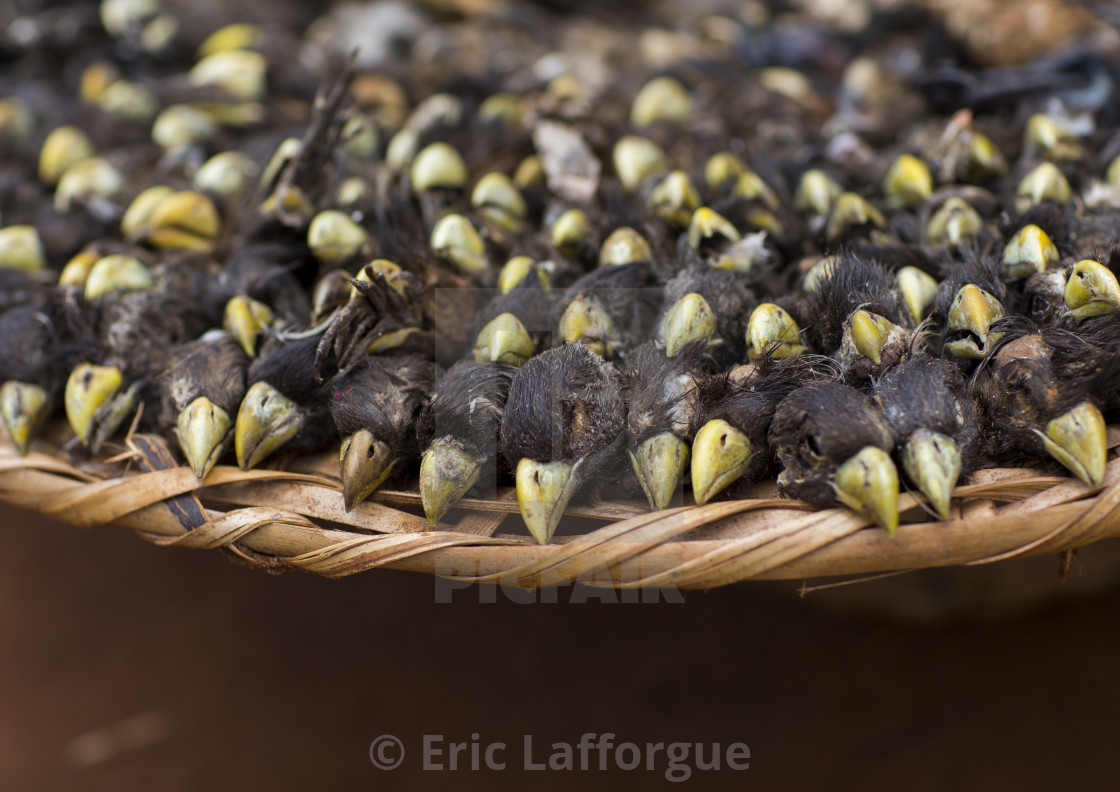 """Benin, West Africa, Bonhicon, dead birds sold on a voodoo market"" stock image"