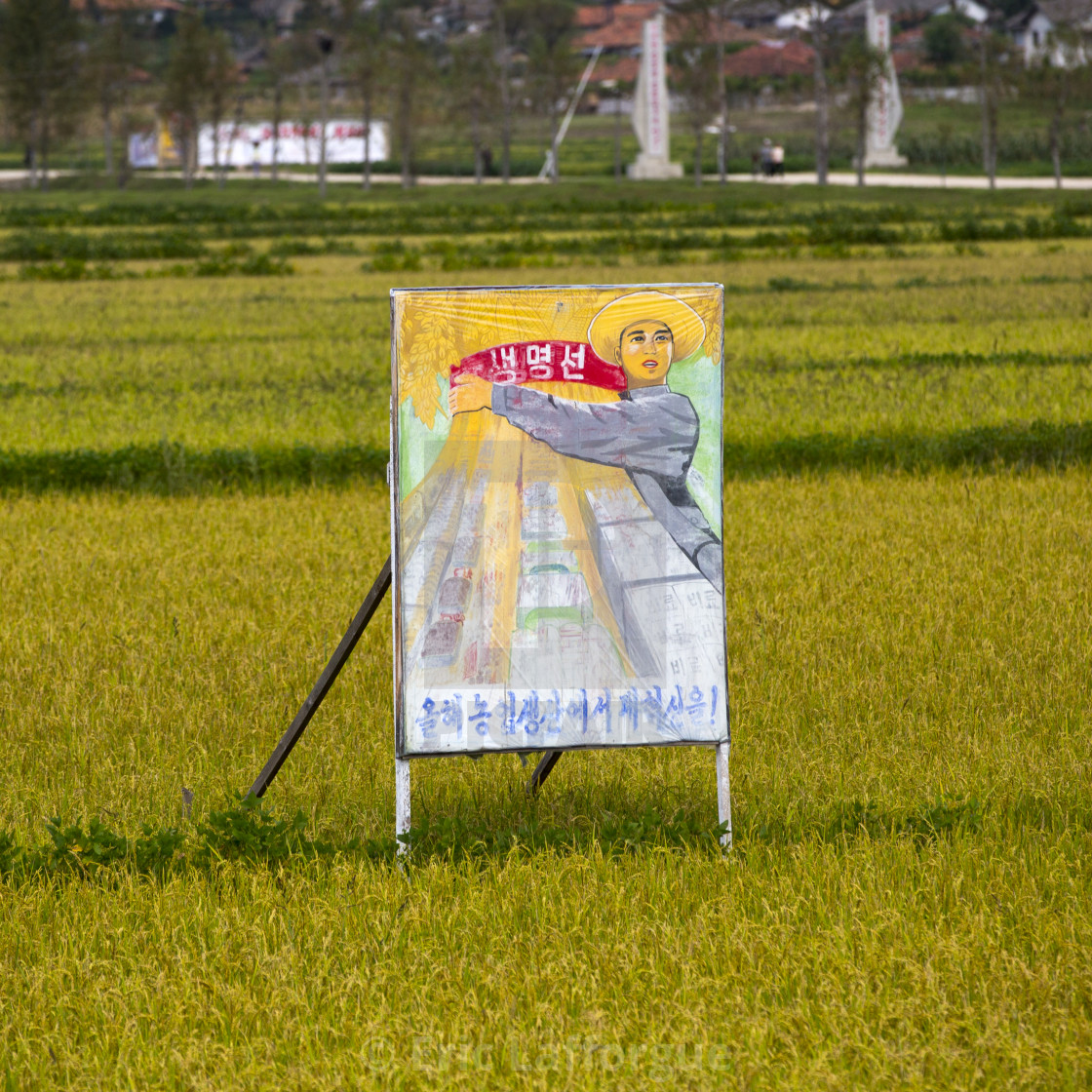 """Propaganda billboard in a rice field depicting a farmer, South Hamgyong..."" stock image"
