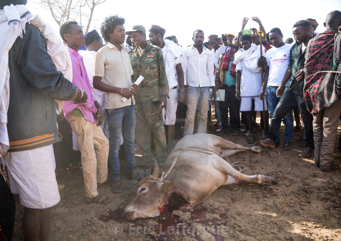 Slaughter of a bull during the Gada system ceremony in Borana tribe